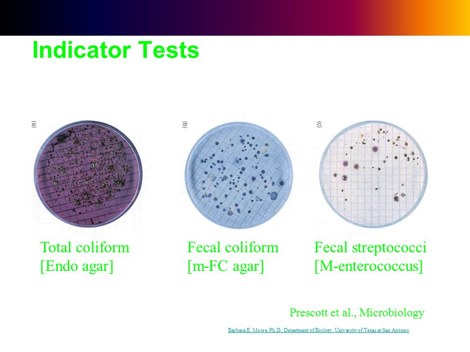 fecal coliform Wd dwgb41 2010 interpreting the presence of coliform bacteria in drinking water determining the bacterial quality of drinking water is.